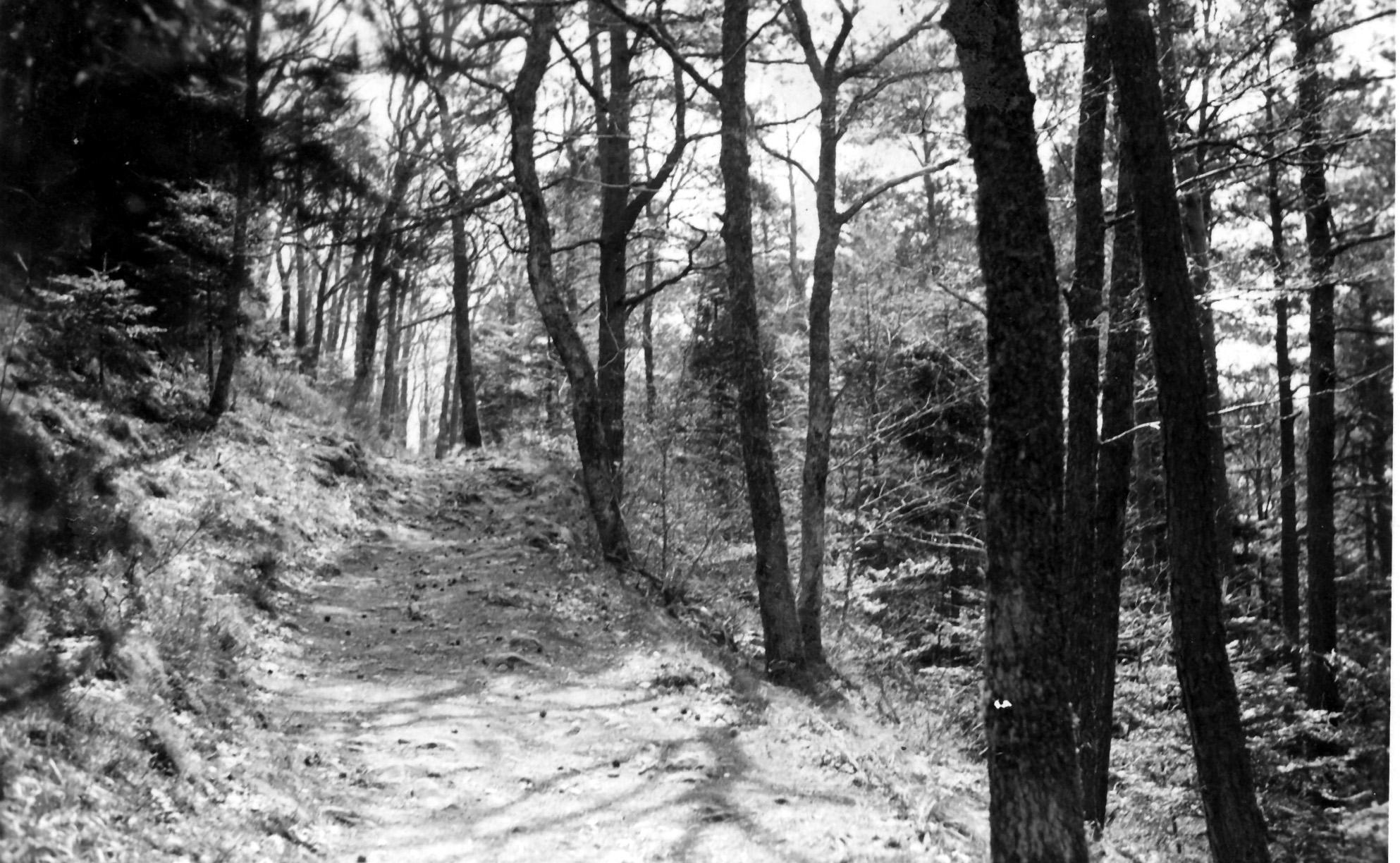1942 sous-bois thannenkirch